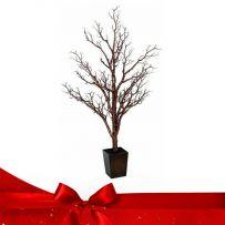 Χριστουγεννιάτικα Κλαδιά - Γλάστρες